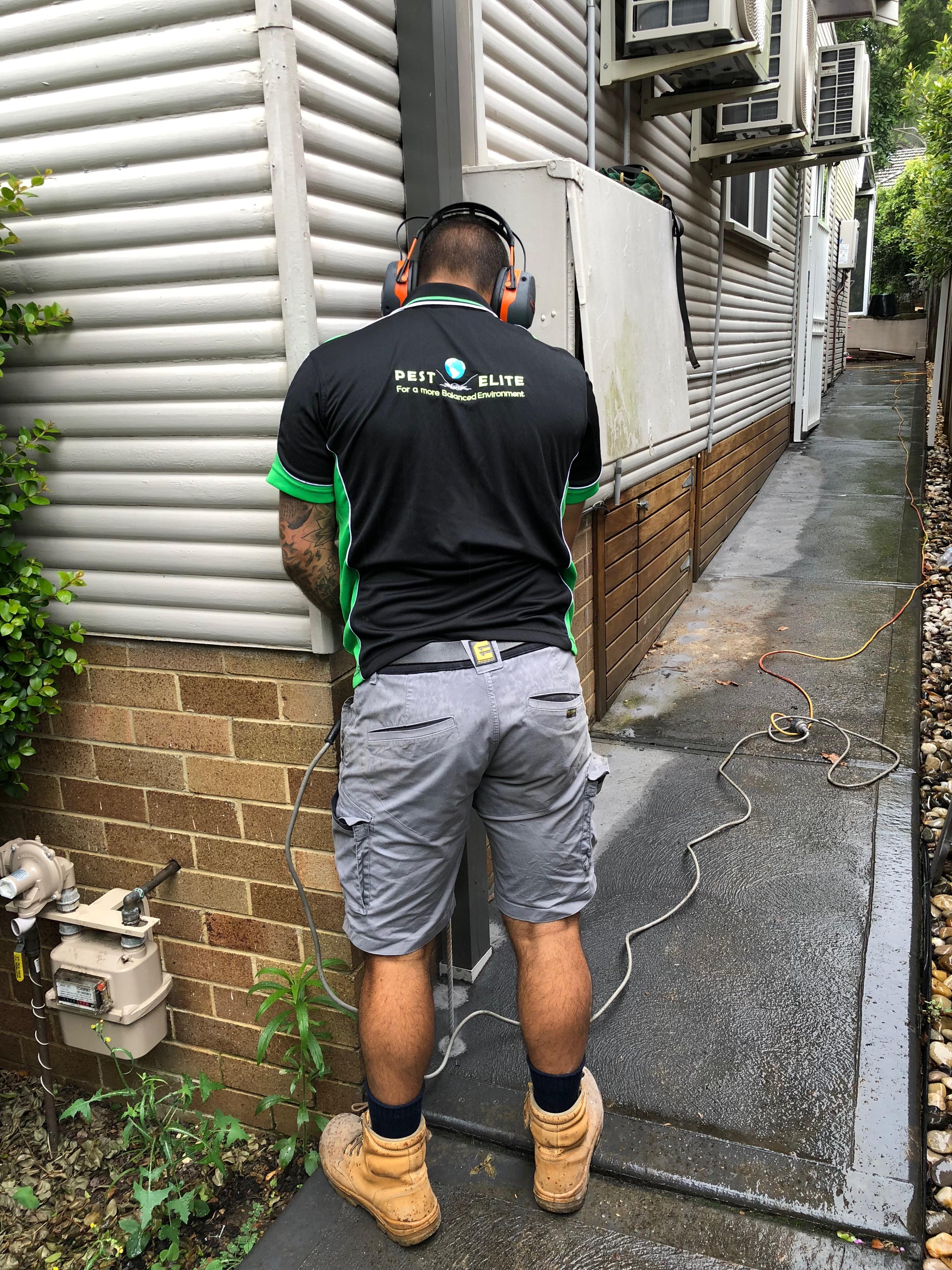 Jake Managing Termites